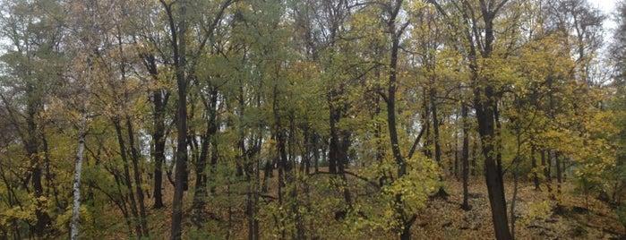 Ботанический сад им. А. Фомина is one of Kiev_travel.