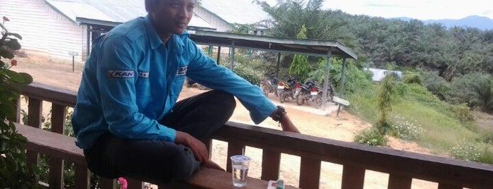 FIrst Lamandau Timber Int'l - Kalimantan Tengah is one of Tempat yang Disukai George.