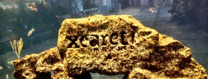Xcaret is one of Cancun.