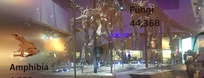 Lee Kong Chian Natural History Museum is one of Singapore Museums 🇸🇬.