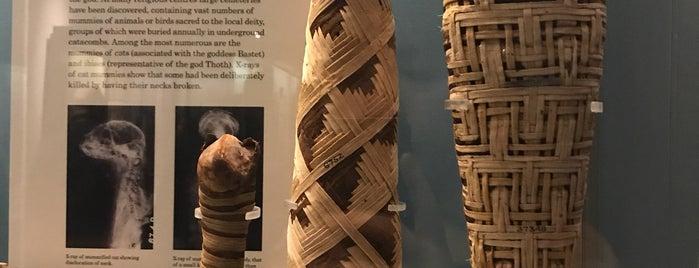 The Egyptian Exhibition is one of Dicle Naz : понравившиеся места.
