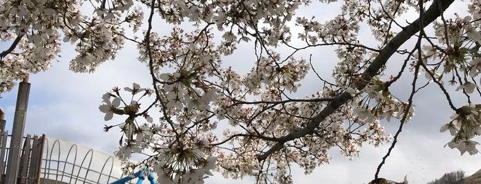科野の里ふれあい公園 is one of Lugares favoritos de Tanaka.