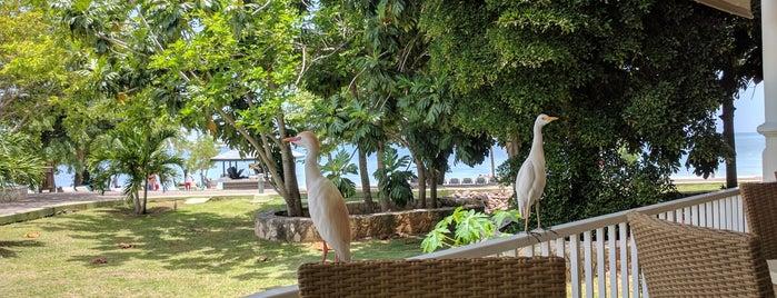 RIU Seagull is one of Tempat yang Disukai Candy.