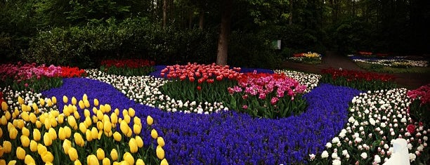 Keukenhof is one of Top photography spots.