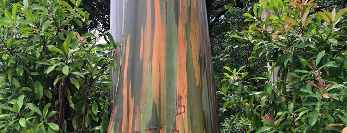 Painted Trees is one of Tempat yang Disukai David.