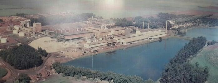 BIOSEV A Louis Dreyfus Commodities Company is one of Orte, die Sidnei gefallen.