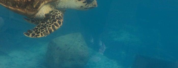 Texas State Aquarium is one of Lieux qui ont plu à Lilith.