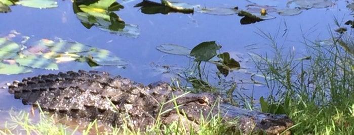 Everglades Safari Park is one of Visit to Miami.