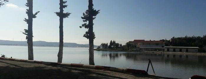 Büyük Liman is one of Lieux qui ont plu à Evrim.