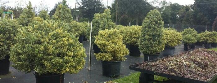 Pells Citrus and Nursery is one of Gulf coast.