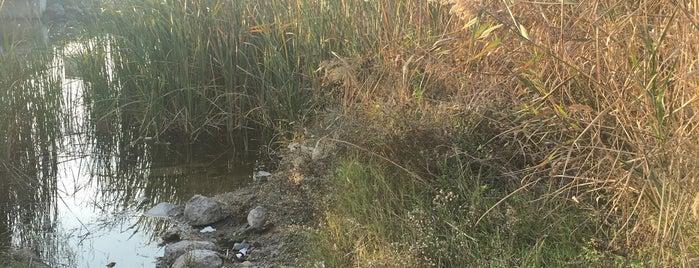 Küçükboğaz Gölpark Mesire Alanı is one of สถานที่ที่ Rıdvan ถูกใจ.