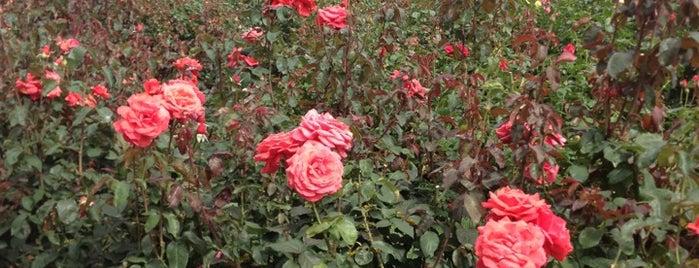 International Rose Test Garden is one of Portlandia Pilgrimage.