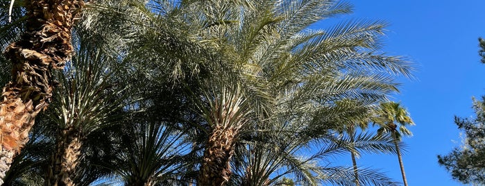 The Parker Palm Springs is one of joshua springs.