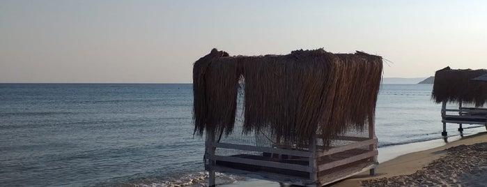 Dharma Beach Club is one of ORASI BURASI.