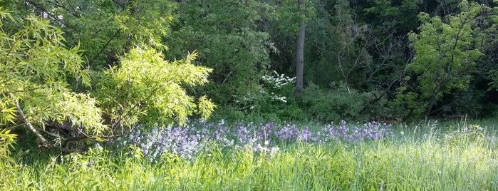 Big Field Trail is one of Take zucchini.