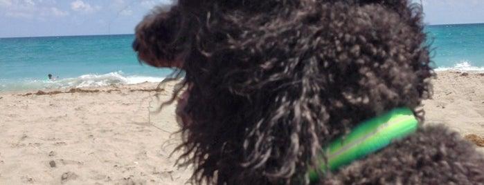 Jupiter Dog Beach is one of Flo Rida.