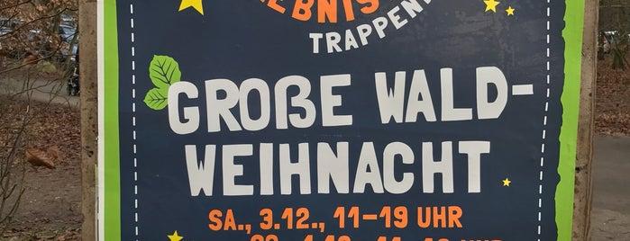Erlebniswald Trappenkamp is one of Plöner See.