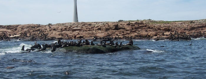 Isla de los Lobos is one of Patagonia (AR).