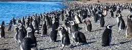 Estancia Harberton is one of Patagonia (AR).