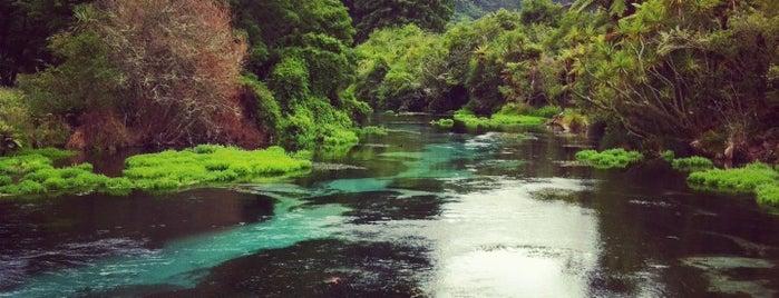 Hamurana Springs Reserve is one of สถานที่ที่ Adam ถูกใจ.