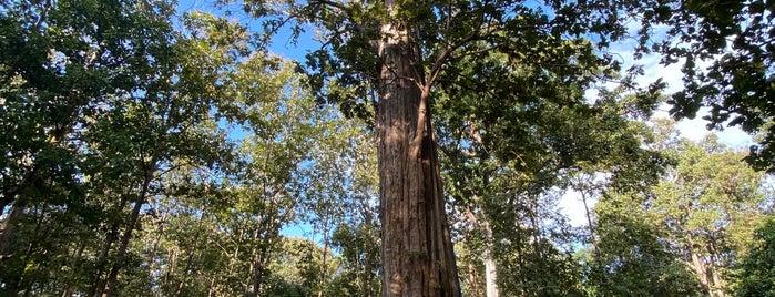 Ton Sak Yai National Park is one of พะเยา แพร่ น่าน อุตรดิตถ์.