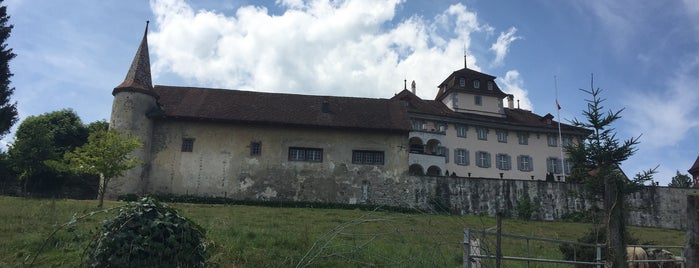 Schloss Hilfikon is one of Castles.
