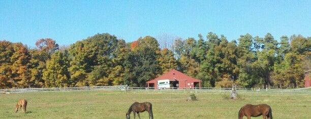 Morris Twp., NJ is one of Posti che sono piaciuti a Maureen.