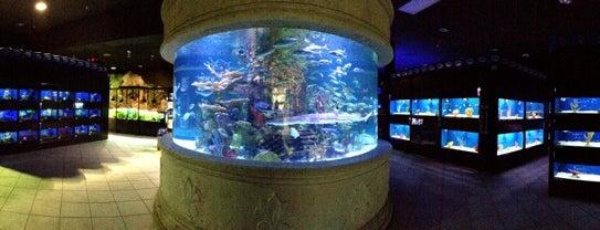 Allfish Emporium is one of Lugares favoritos de Ciri.