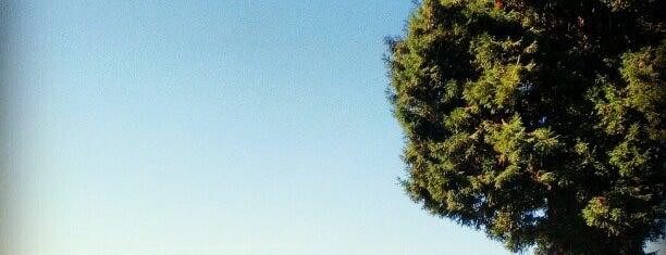 Willard Park is one of Kouros'un Kaydettiği Mekanlar.