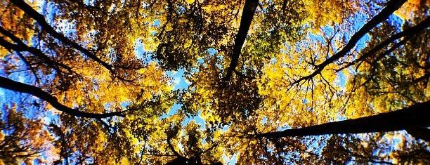 Shenandoah National Park is one of American National Parks.