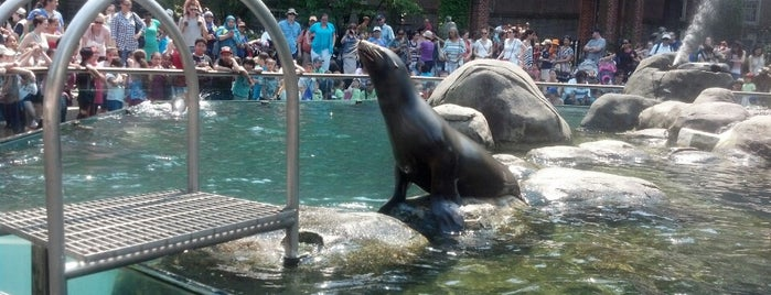 Zoo de Central Park is one of Manhattan!.