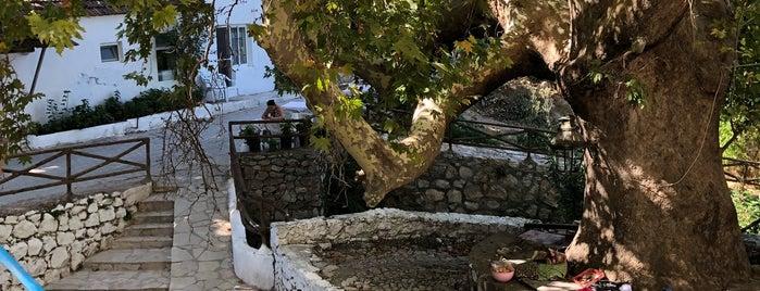 çatalkaya köyü çınar altı is one of Lieux qui ont plu à Mehmet Ali.