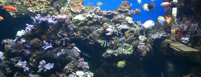 Waikiki Aquarium is one of The Best of Waikiki.