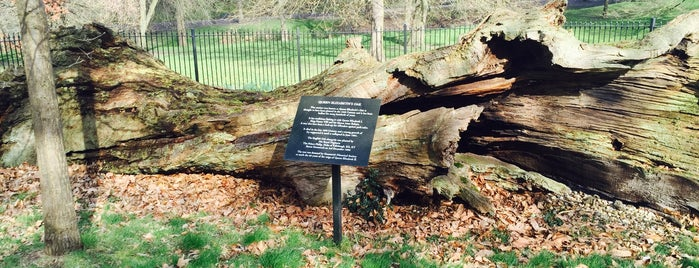 Queen Elizabeth's Oak is one of Greenwich and Docklands; London.