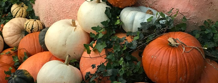 Europe's Largest Pumpkin is one of Crazy Places.