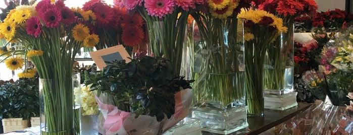 Flower Factory is one of Tempat yang Disimpan E.