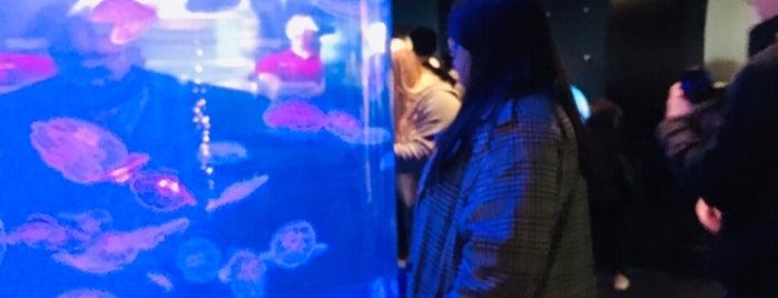 Vancouver Aquarium Gift Shop is one of สถานที่ที่ SoyElii ถูกใจ.