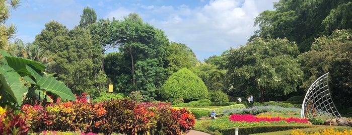 Roma Street Parklands is one of Orte, die Globetrottergirls gefallen.