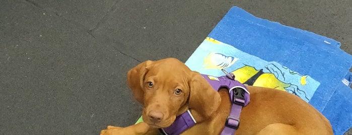 Ahimsa Dog Training is one of Kellyさんのお気に入りスポット.