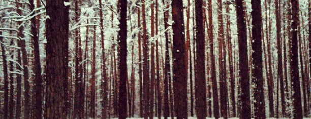Бикерниекский лес is one of Денис : понравившиеся места.