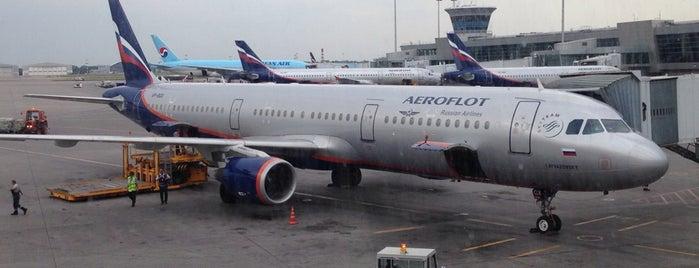 Sheremetyevo International Airport (SVO) is one of สนามบินนานาชาติ (1).