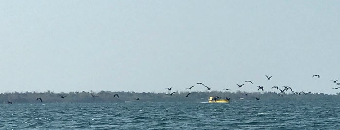 Bat Island is one of Kenn R : понравившиеся места.