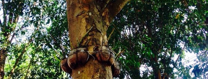 Phuket Triple Tree Latex is one of Posti che sono piaciuti a Ольга.