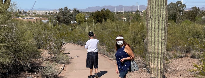 Sonoran Desert Nature Loop Trail is one of PHX.
