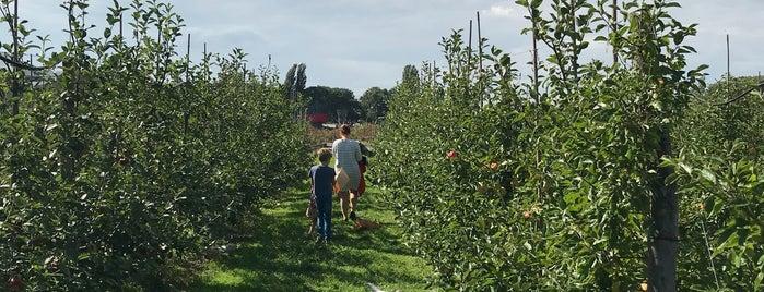 Fruittuin van West is one of Z☼nnige terrassen in Amsterdam❌❌❌.