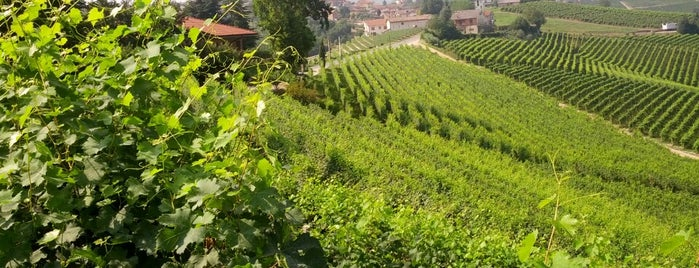 Cavallotto Bricco Boschis is one of Alba e Langhe.