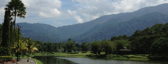 Taman Tasik Taiping (Lake Garden) is one of Locais curtidos por Alexey.