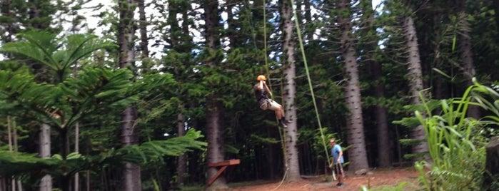 Just Live Zipline Treetop Tour is one of Places to Visit: Kauai, HI.