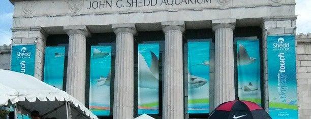 Shedd Aquarium is one of Ohio House Motel.