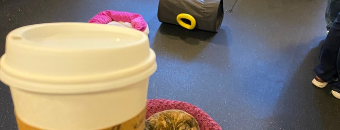 The Cat Cafe is one of San Diego.